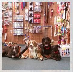Lazy Creek Discount Pet Food Center